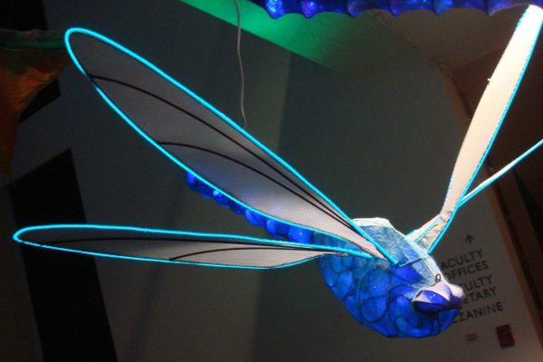 IllDragonfly2